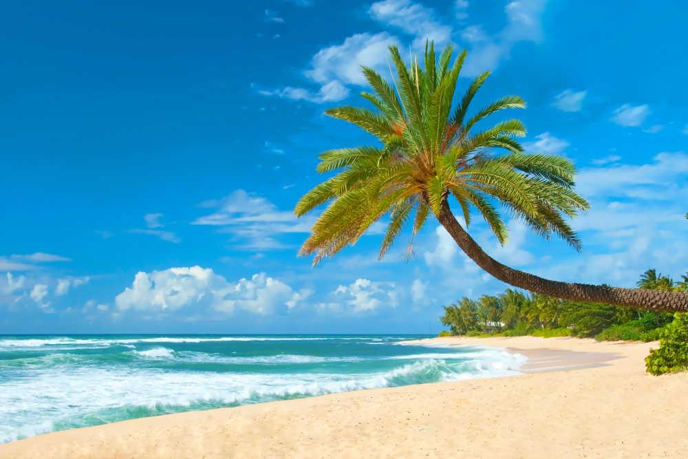 G 252 Nstige Fl 252 Ge Nach Honolulu Hawaii Finden Auf